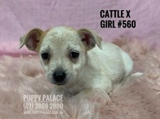 Cattle X - Girl - $995
